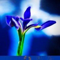 flower_trg9650_dxo-200x200