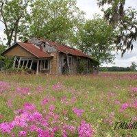 old_homestead-200x200